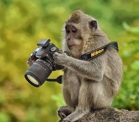 monkey with dslr